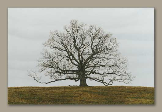 Painting of a tree with no leaves